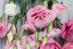 Neuer rosa Blumenrahmen auf hölzernem Hintergrund Lizenzfreie Stockbilder