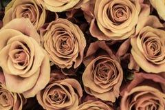 Neuer rosa grüner Weinleserosen-Nahaufnahmehintergrund Lizenzfreies Stockfoto