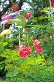 Neuer roter Hintergrund der Blumen und grüner der Blätter der Unschärfe Lizenzfreie Stockfotografie