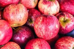 Neuer roter reifer Apfelhintergrund Lizenzfreies Stockbild