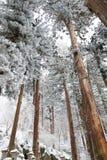 Neuer Schnee Stockbild