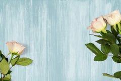 Neuer Schnitt-hellrosa Rosen-Hintergrund Stockfoto