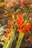 Neuer Schnitt-tropische Blumen wogen gegen bunten blühenden Bush ab stockbild