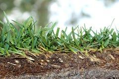 Neuer Schnittgrün-Rasenrasen-Zusammenfassungshintergrund Stockfoto
