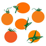Neuer Tomatenvektor Stockfotos