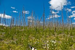 Neuer Wald Lizenzfreie Stockbilder