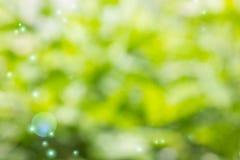 Neuer weicher grüne Farbe-bokeh Buschbaum und -Blendenfleck Stockfoto