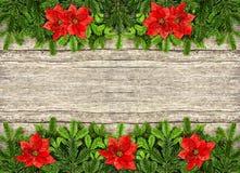 Neuer Weihnachtsbaumast und rote Poinsettiablumen Stockbilder