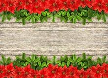 Neuer Weihnachtsbaumast und rote Poinsettiablumen Stockfoto