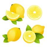 Neuer Zitronenfrucht-Scheibensatz Sammlung der realistischen saftigen Zitrusfrucht mit Blättern vector Illustration Lizenzfreie Stockfotos