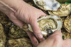 Neues Austernöffnen Stockbilder