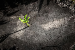 Neues Baumwachstum oben auf totem Baum als Geschäftskonzept Stockfoto