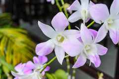 Neues Blumenstraußorchideen-Farbveilchen mit Hintergrund stockbild