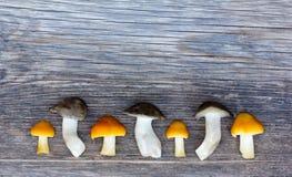 Neues Forest Mushrooms On Old Wooden-Brett mit den Sprüngen in Folge gezeichnet Stockfotos