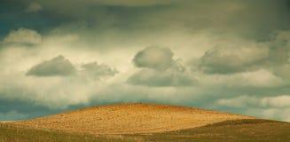 Neues gepflogenes Feld mit blauem Himmel und Wolken Stockfotos