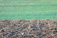 Neues gepflogenes Feld mit jungem Weizen auf einem grünen Hintergrund Stockfotografie