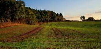 Neues Getreide auf Landwirtfeld stockbilder