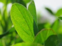Neues Grün lässt Hintergrund-im Frühjahr Jahreszeit Lizenzfreie Stockfotos