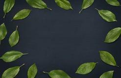 Neues Grün lässt Zusammensetzung auf Tafel Feld von Blättern auf dunklem Hintergrund Draufsicht, flache Lage Stockfoto