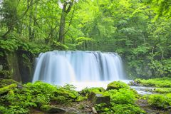 Neues Grün und Wasserfall Stockfoto