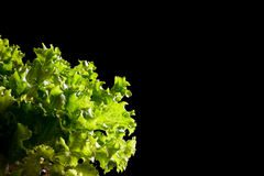 Neues grünes Kopfsalatsalatfragment auf schwarzem Hintergrund lizenzfreie stockfotografie
