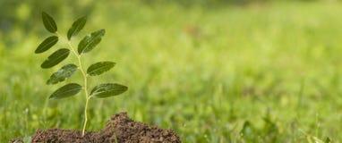Neues grünes Leben Lizenzfreie Stockfotos
