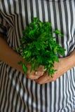 Neues grünes rohes Petersilienbündel in den chief's Händen stockfoto