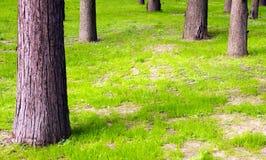 Neues Gras und Kabel Lizenzfreie Stockfotos
