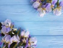 Neues Irisblütenbündel feiern Karten-Eleganzblume der Brettflora dekorative auf einem blauen hölzernen Hintergrund Stockfotografie