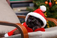Neues Jahr ` s Bild der schwarzen Katze in Sankt-Kostüm Stockfotografie