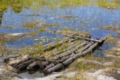 Neues Leben auf einem verlassenen Floss in flachem Reed Pond Lizenzfreie Stockfotos