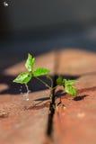 Neues Leben, das auf einem alten Holzfußboden wächst Lizenzfreie Stockfotografie