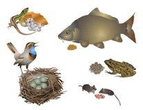 Neues Leben in den verschiedenen Spezies von Tieren. stock abbildung