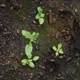 Neues Leben des wachsenden Gemüses von den Samen und vom Moos Stockfotos