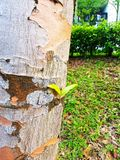 Neues Leben eines Baums Lizenzfreie Stockfotografie