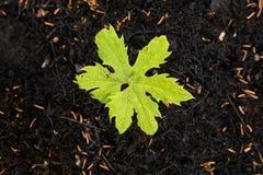 Neues Leben in gebranntem Wald Lizenzfreie Stockbilder