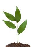 Neues Lebenkonzept mit grünem Zweig auf Weiß Lizenzfreies Stockbild