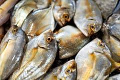 Neues Lebensmittel, roher Fisch Malabar Trevally Gesunde Nahrung, Diät, stockbild
