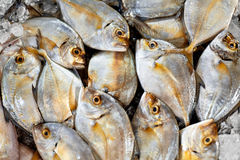Neues Lebensmittel, roher Fisch Malabar Trevally Gesunde Nahrung, Diät, stockfotografie