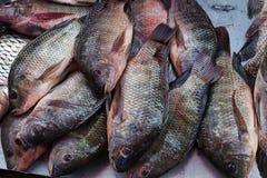 Neues Nil-Tilapialebensmittel sind im Verkauf im Basar Stockbild