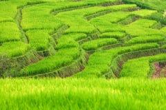 Neues Reisfeld Stockbild