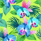 Neues Vektororchideenmuster Stockfotografie