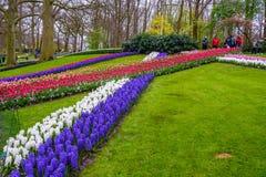 Neues Vorfrühlingsrosa, Purpur, weiße Hyazinthenbirnen Blumenbeet mit Hyazinthen in Keukenhof-Park, Lisse, Holland, die Niederlan Stockfoto