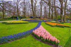 Neues Vorfrühlingsrosa, Purpur, weiße Hyazinthenbirnen Blumenbeet mit Hyazinthen in Keukenhof-Park, Lisse, Holland, die Niederlan Stockbild