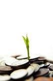 Neues Wachstum Lizenzfreie Stockbilder
