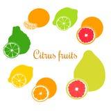 Neues Zitrusfruchtset Flach orange, Zitrone, Kalk, Bergamotte, Mandarine, Pampelmuse und Pampelmuse mit Scheiben Lizenzfreie Stockfotografie