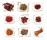 Neuf épices différentes sur le papier Photos libres de droits