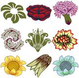 Neuf seuls éléments floraux Photographie stock