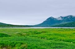Neufundland-Küste lizenzfreies stockfoto