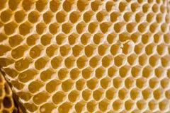 Neugeborene Biene auf Bienenwabe lizenzfreie stockbilder